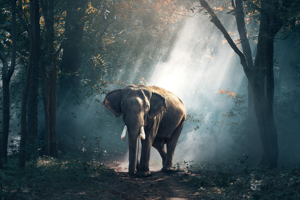elephant trivia quiz