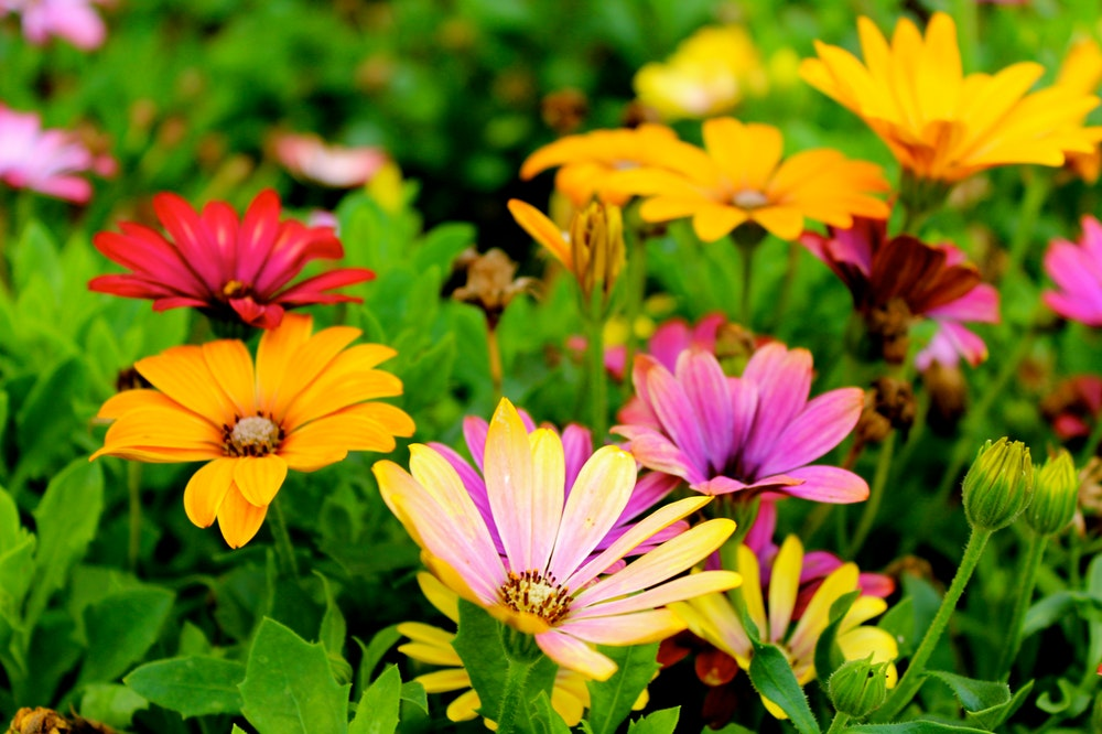 flower quiz questions and answers