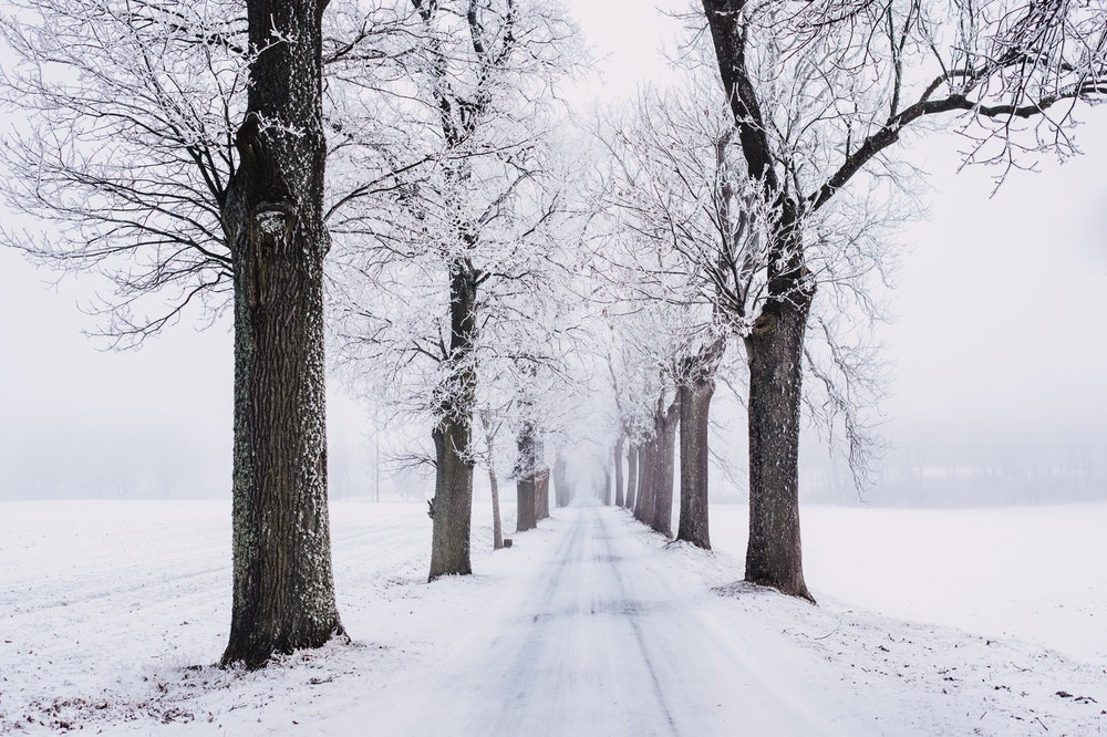 Winter Quiz Questions And Answers