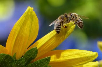 Bees Quiz Questions And Answers
