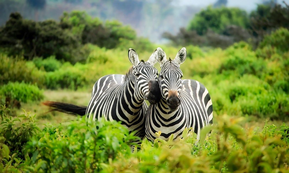 World Wildlife Quiz Questions And Answer