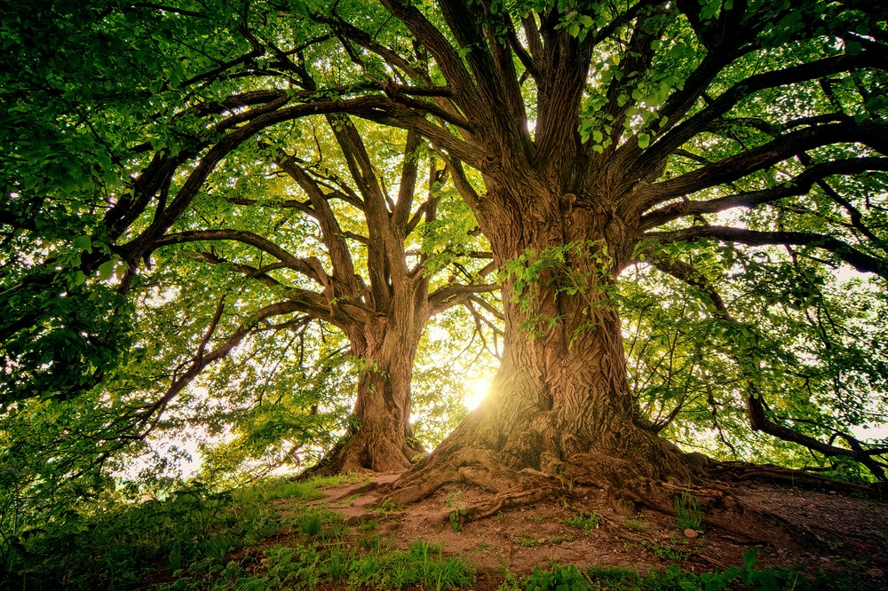 Tree Quiz Questions And Answers